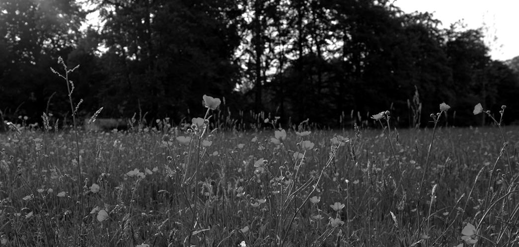 Wiese_kleinsw
